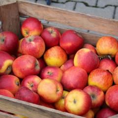 Jabłka dla mieszkańców Niemstowa